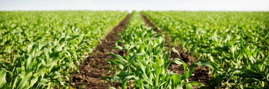 618线上卖肥料,交易额破123万元!